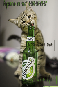 не-пей!-водитель